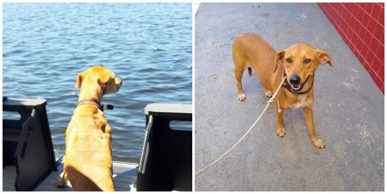 Corpo de Bombeiros resgata cadela em alto-mar no Canal da Galheta; veja o vídeo 1